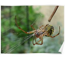 Spider Working on its Web Poster