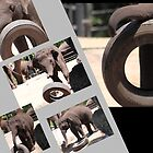 The Tyres Elephants choose ! by miroslava