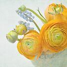 spring blossoms by Iris Lehnhardt