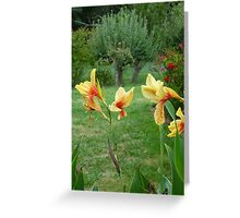That yellow Lily again. Greeting Card