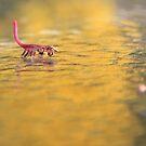 Almost a scorpio.. by Tamara Travers