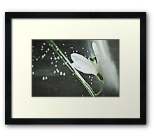 Bubbly Spring Framed Print