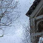 Rain by Dan Barker