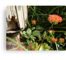 Decay,Rust and Beauty  Canvas Print