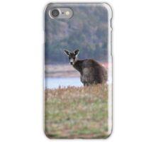 Curious Kangaroo at Wyangala iPhone Case/Skin