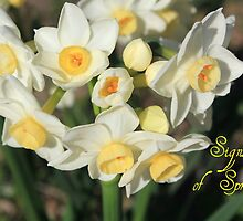 Signs of Spring by DebbieCHayes