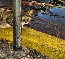 Among the Salty Puddles by GolemAura