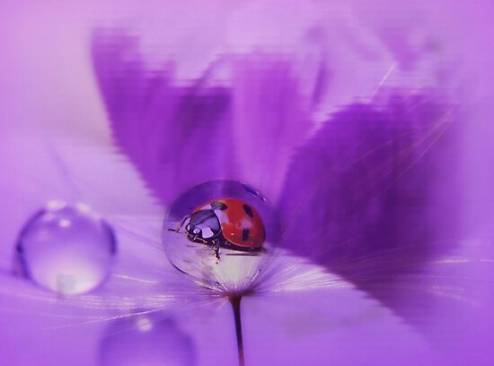 A drop of luck... by Yool