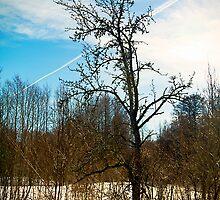 Tree. Snow. by tutulele