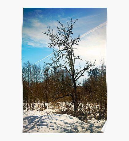 Tree. Snow. Poster