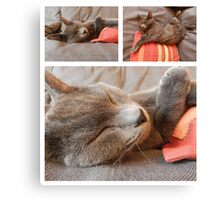 Russian Blue cat ...... Canvas Print