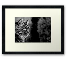 My Favourite Mews Framed Print