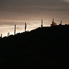 Cacti on the Ridge by Tracy Riddell