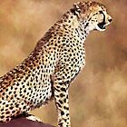 Cheetah.... by ellenspaintings