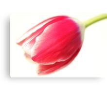 A Humble Tulip Canvas Print