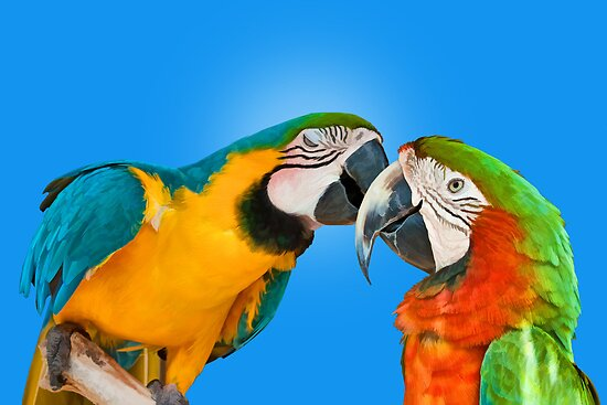 Loving Parrots by Delores Knowles