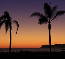 Palm trees  by s2kologist