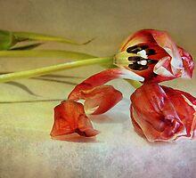 romance by lucyliu
