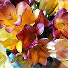 Bunch of Freesias Water Colour by Jennifer Sumpton