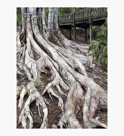 ROOTS 5 Photographic Print
