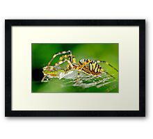 Wasp Spider Framed Print
