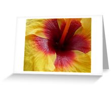 Yellow & Red Hibiscus Flower Greeting Card