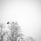 Black and White by medlajn