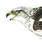 Bond, A Ferruginous Hawk by Bryony Griffiths