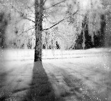 'The Ghostly Tree' by Tom Erik Douglas Smith