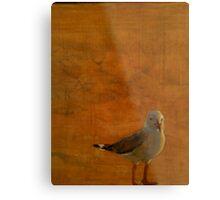 Silver Gull Metal Print