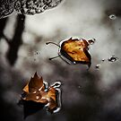 Leaves in a Puddle by Kaitlin Kelly