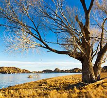 Barren Tree by BGSPhoto