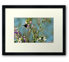 Mr. Bumble Bee Framed Print