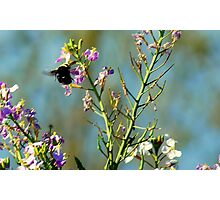Mr. Bumble Bee Photographic Print