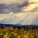 Grand Teton - From Above by Kaitlin Kelly