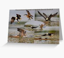 Canadian Goose vs Bald Eagle 2 Greeting Card