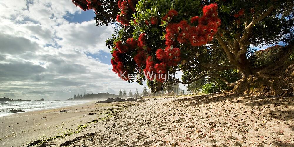 Mount Mauao Pohutukawa Summer by Ken Wright