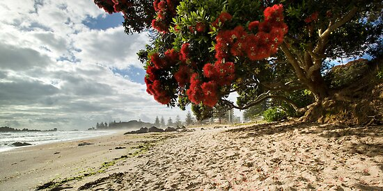 Mount Mauao Pohutukawa Summer by Ken Wright