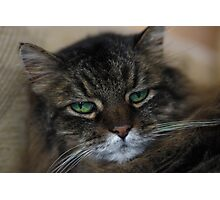 Rascal Cat Photographic Print