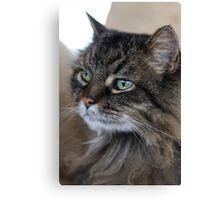 Rascal Cat Profile Canvas Print