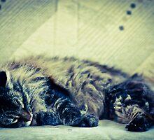 Cat Nap by evergleammm