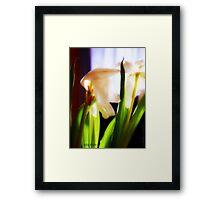 tulip (light) Framed Print