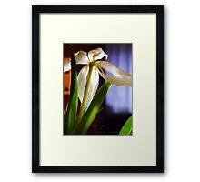 tulip       glow Framed Print