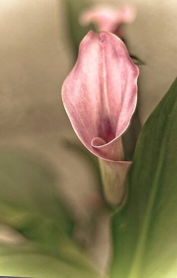 Cala Lilly by Annie Lemay  Photography