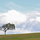 One Tree - Panorama by John Butler
