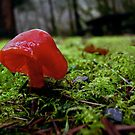 Red Wax cap by olbetsy
