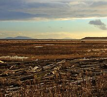 Boundary Bay, Delta, BC, Canada by Brenda Boisvert