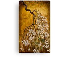 Blooming sakura Canvas Print