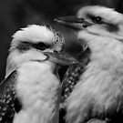 Two Kookaburras by Sue  Thomson