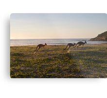 Kangaroos Metal Print